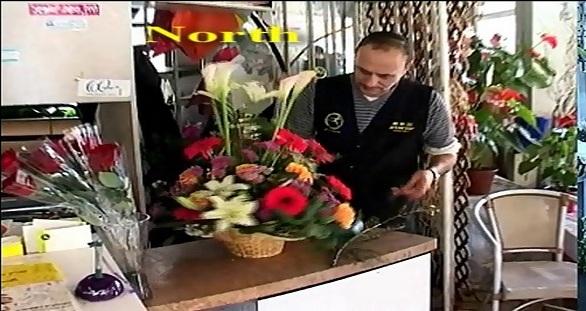 פרחי גינזבורג חיפה חוזרת