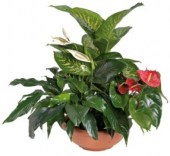 interflora_product_6064